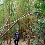 We passed through all kinds of plants and trees, bamboo included